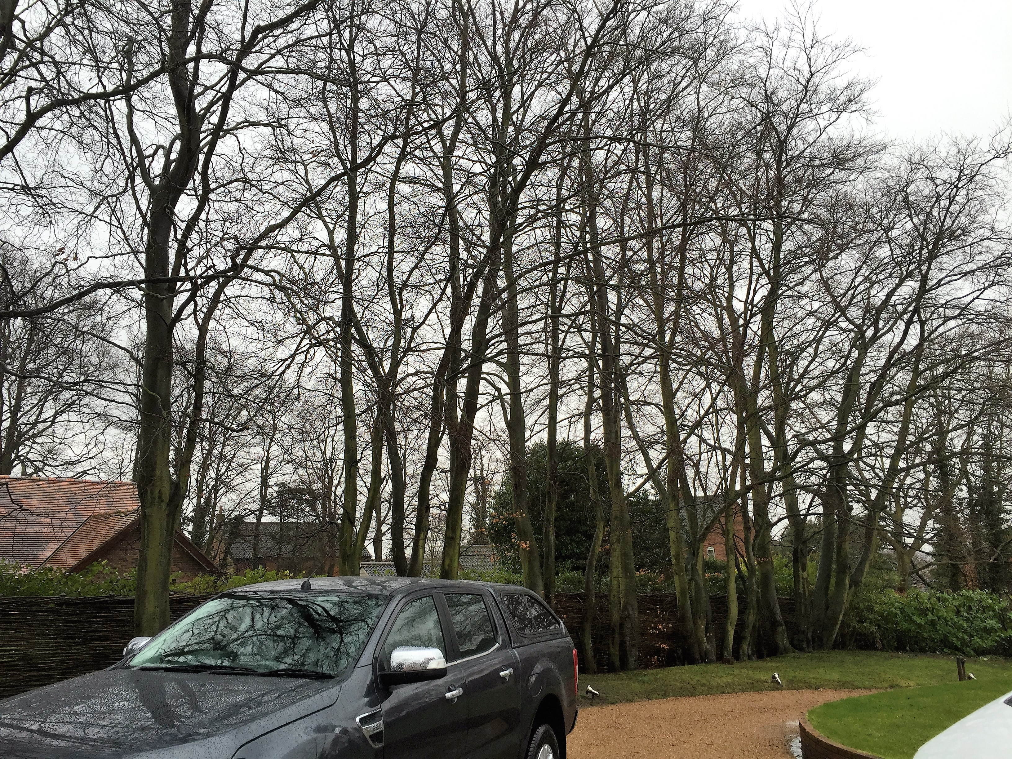 Professional Tree Surgery In Norfolk