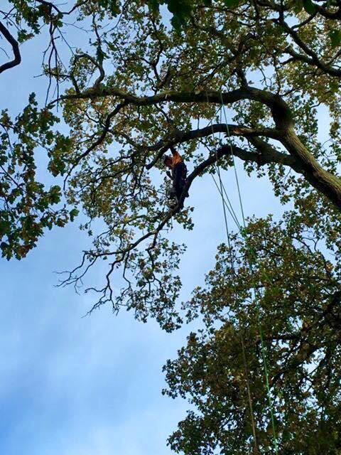 Norfolk Tree Surgery Team