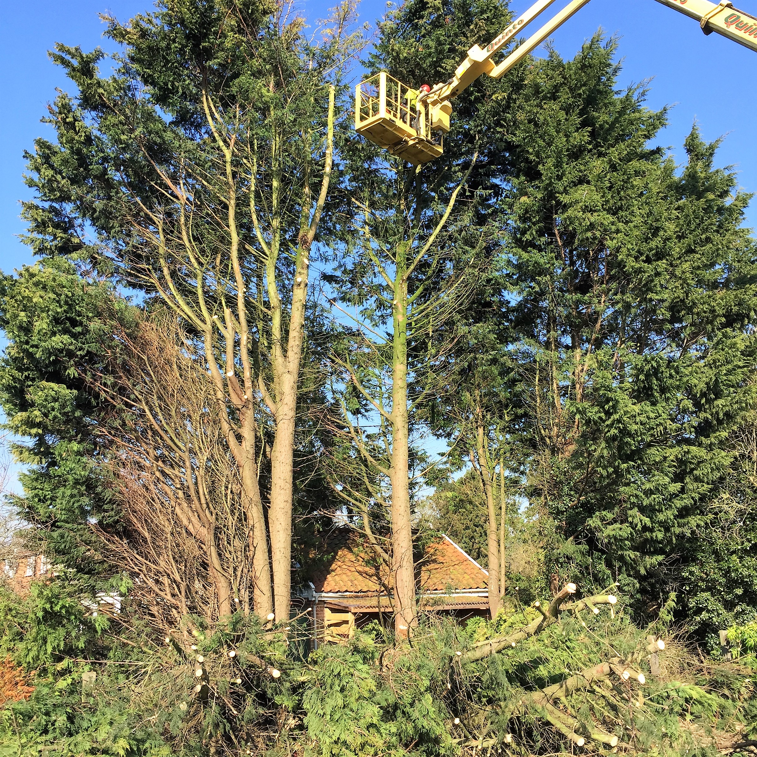 Tree Work in Norfolk