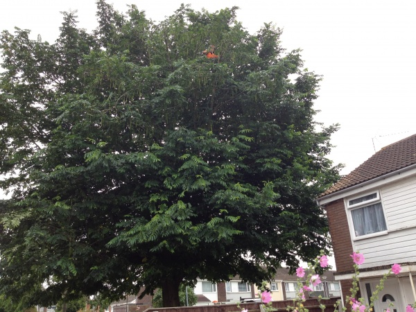 Our Tree Surgeons King Lynn, Norfolk,