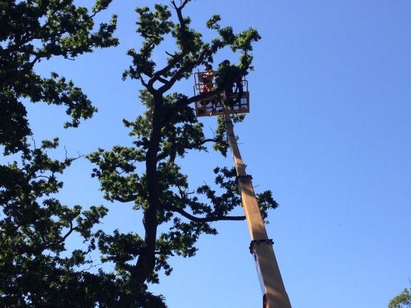 Experienced Tree Surgeons in Norfolk