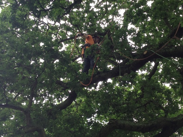 Tree Surgeon Rory