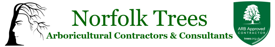Norfolk-Trees.co.uk | Tree Surgery in Norfolk