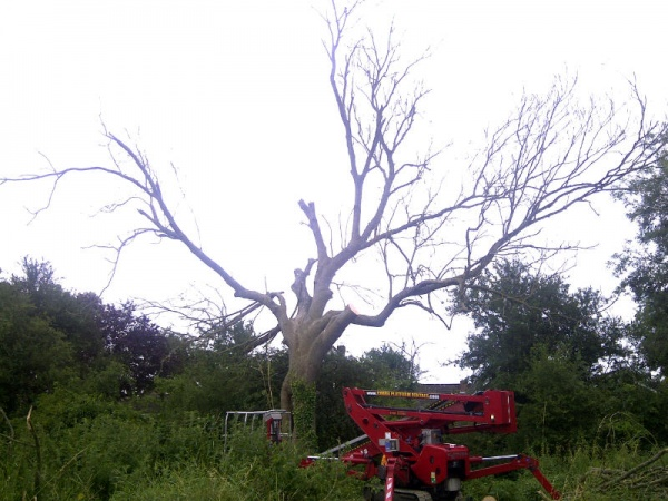 Tree surgery Potters Fen