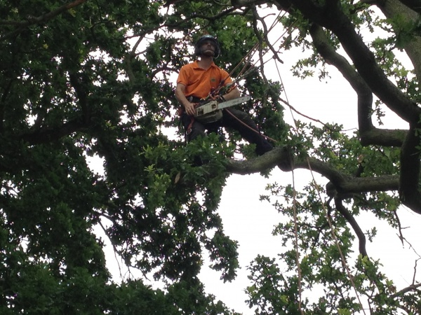 Chris one of our tree surgeons Kings Lynn, Norfolk
