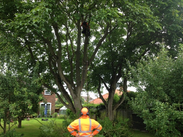 tree surgeon Fred
