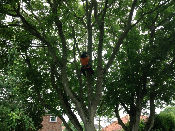Tree Surgeon Chris