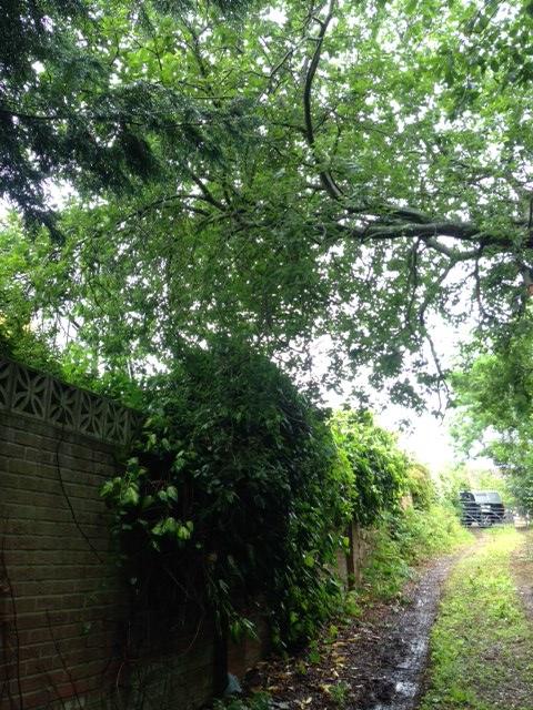 Insured Tree Surgeons In Norwich Norfolk